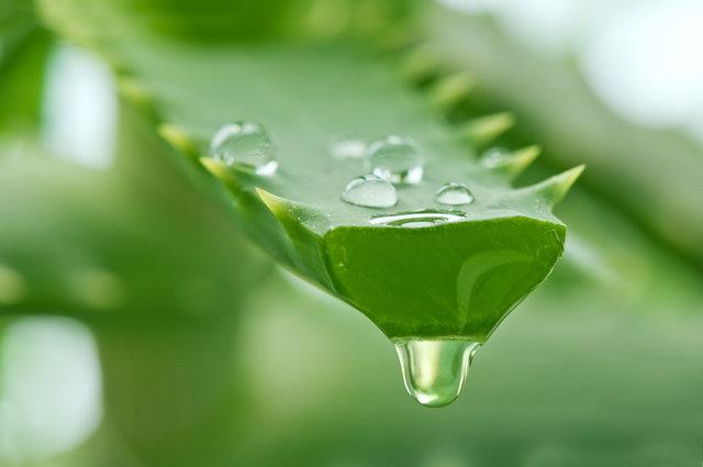 Aloes na odchudzanie: korzyści i skutki uboczne | Fitmed