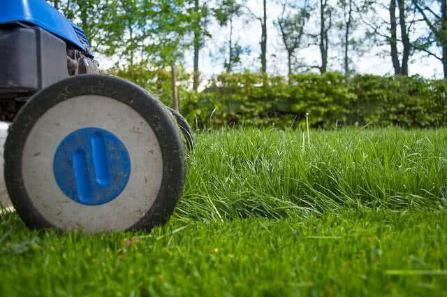 Kosiarka czy podkaszarka - które rozwiązanie sprawdzi się w Twoim ogrodzie?