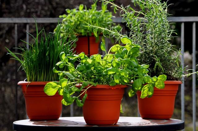 zioła a zdrowie